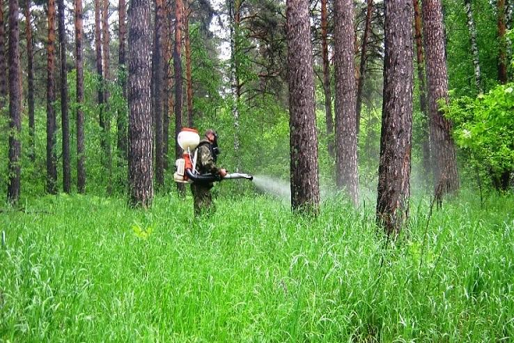 Обработка от клещей лесных массивов в РФ